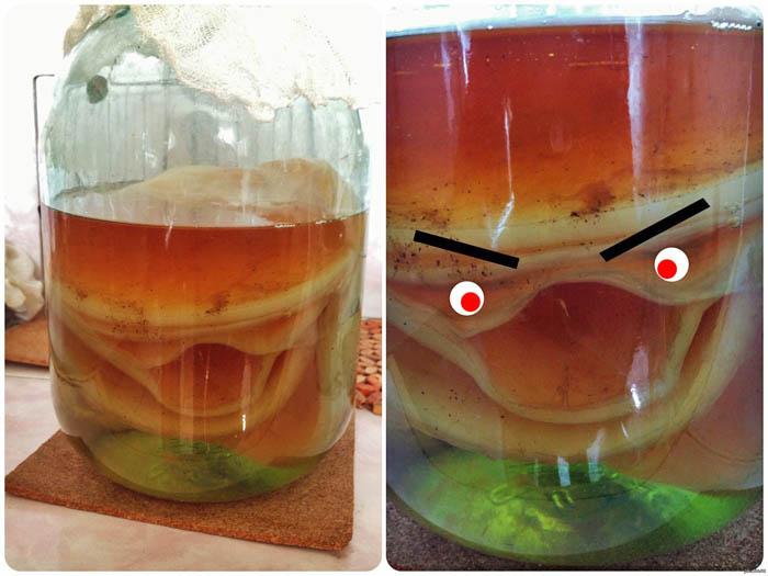 Мем про чайный гриб