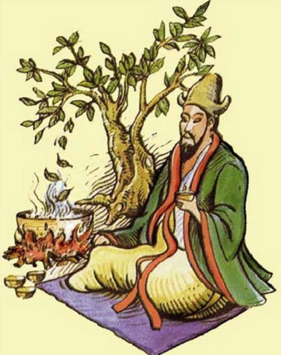 откуда появился чайный гриб, Происхождение