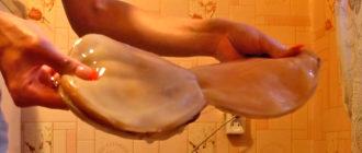 Как разделить чайный гриб в домашних условиях